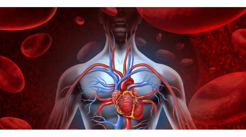 Come prevenire le malattie cardiovascolari